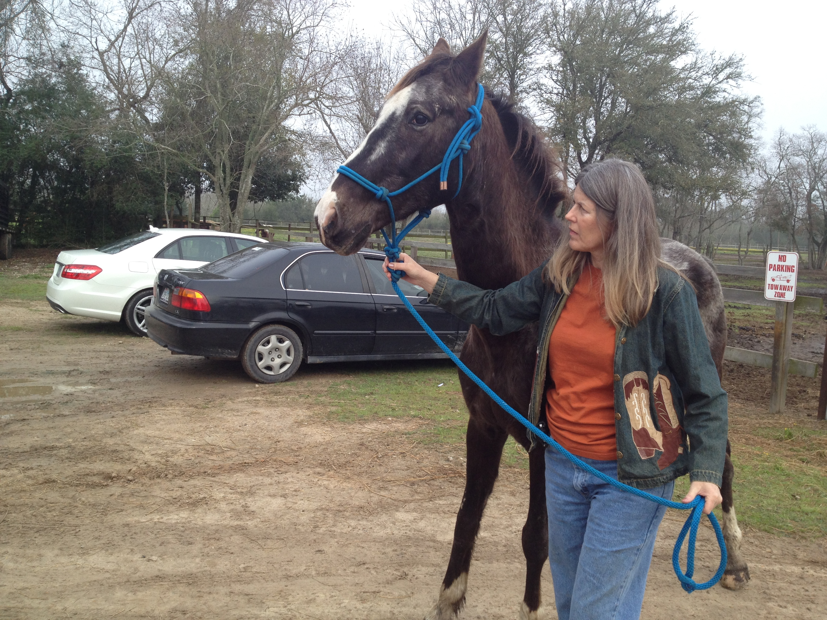 Rebecca Williams, Executive Director of Habitat Horses leads a horse to sanctuary